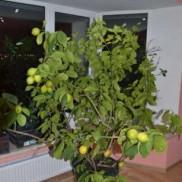 Кімнатні рослини .